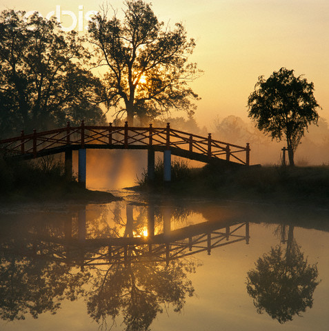 Japanese bridge at dawn, private garden