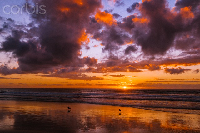 A pair of Pied Oyster Catchers on the beach at sunrise, Moreton Island, Queensland, Australia